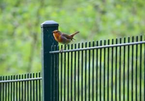 bird-335741_640(1)