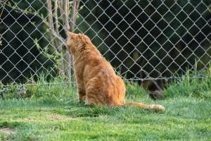 cat-993661_640