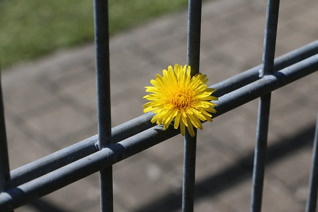 fence-722437_640(3)